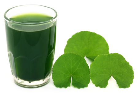 longevity medicine: Medicinal thankuni leaves of Indian subcontinent with extract