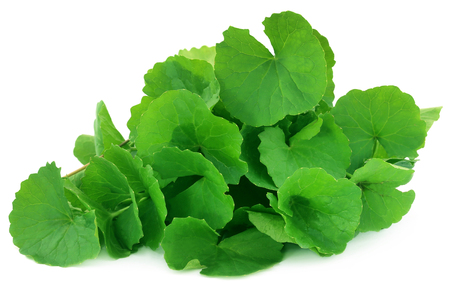 Medicinal thankuni leaves of Indian subcontinent Stockfoto
