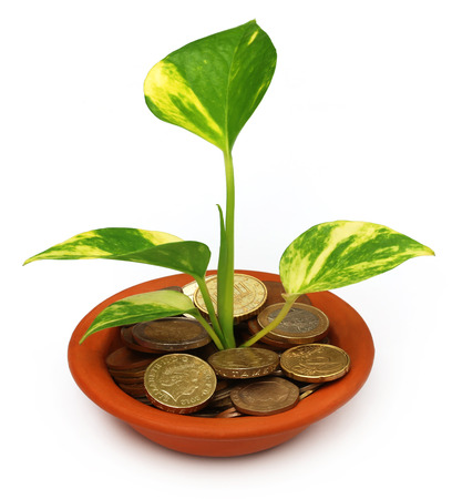 money plant: Money plant grows from coins in a bowl