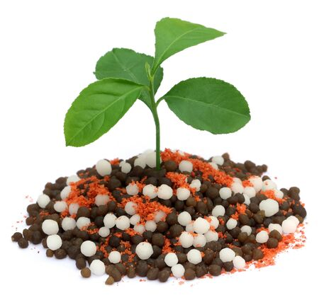 chemical fertilizer: Lemon plant growing in chemical fertilizer over white background Stock Photo