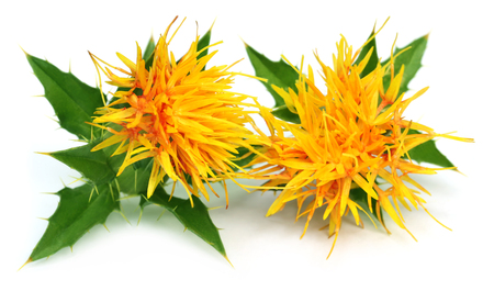 Edible safflower over white background