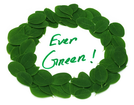 sajna: Ever Green written in Moringa leaves frame over white background