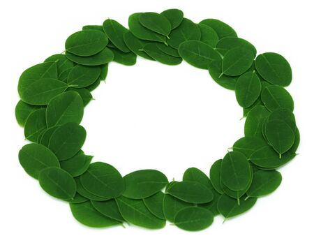 marango: Edible moringa leaves make a frame over white background Stock Photo