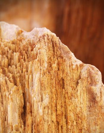 sedimentary: Closeup of fossilized sedimentary rock