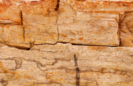 petrified fossil: Sedimentary rock as a background Stock Photo