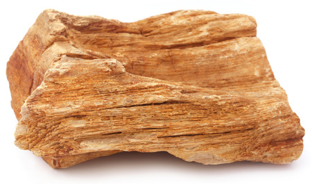 petrified fossil: Sedimentary rocks over white background