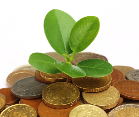 money plant: Coins with green plant as money plant concept Stock Photo