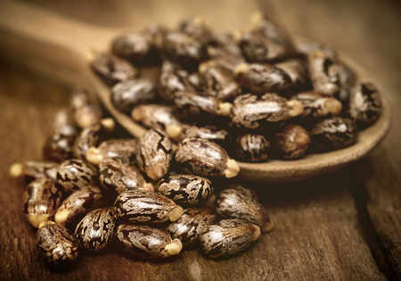 triglycerides: Castor beans in a wooden spoon Stock Photo