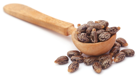 triglycerides: Castor beans in wooden spoon over white background