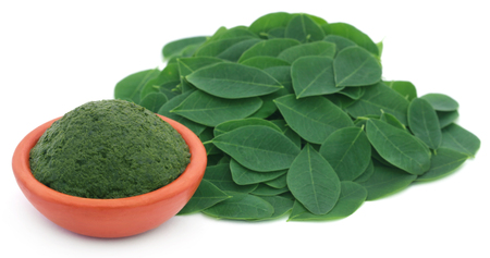 oleifera: Mashed Moringa leaves in a pottery over white background