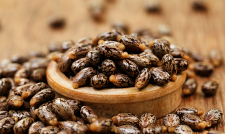 triglycerides: Castor beans in a wooden bowl