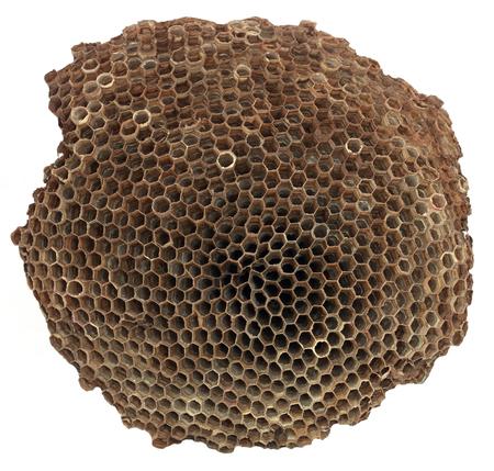 animal nest: Wasp nest over white background