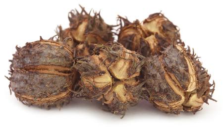 triglycerides: Castor beans over white background Stock Photo