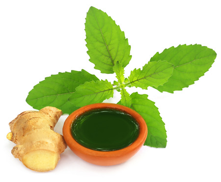 tulasi: Ayurvedic combination of holy basil and ginger overw white background