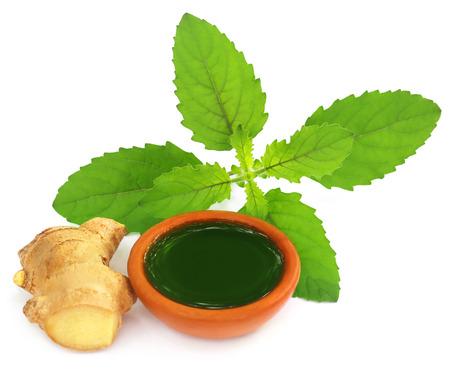 tulasi: Ayurvedic combination of holy basil and ginger overw white background