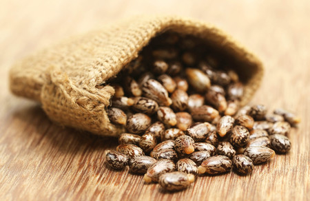 triglycerides: Castor beans in jute sack on wooden surface