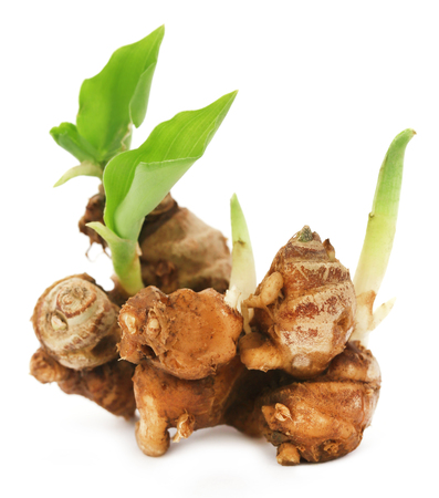 Kaempferia galanga known as aromatic ginger over white background Banco de Imagens - 55505747