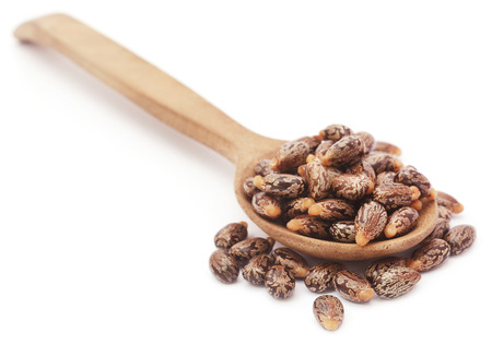 castor: Castor beans in a wooden spoon over white background