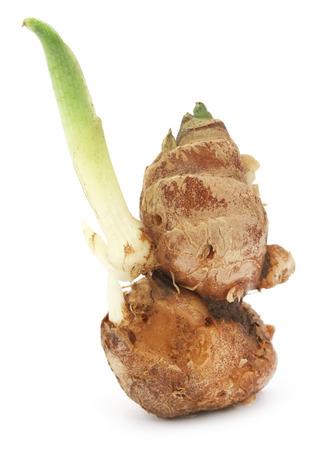 aromatic: Kaempferia galanga known as aromatic ginger over white background Stock Photo