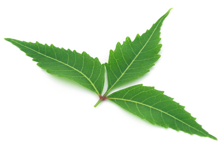 Medicinal neem leaf over white background Stock Photo