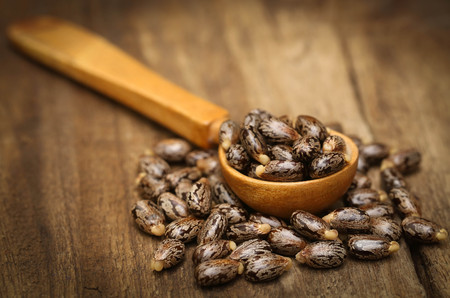 triglycerides: Castor beans in wooden spoon