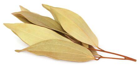 kafir lime: Cassia leaves over white background