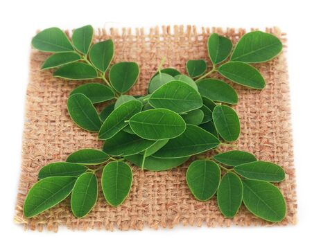 marango: Medicinal moringa leaves on jute surface Stock Photo