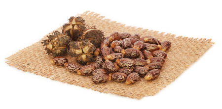 triglycerides: Castor beans on sack over white background