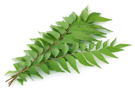 Bunch of curry leaves over white background