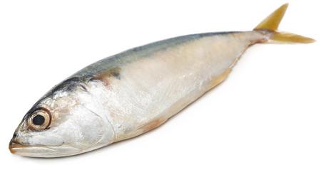 thunnus: Tuna fish over white background