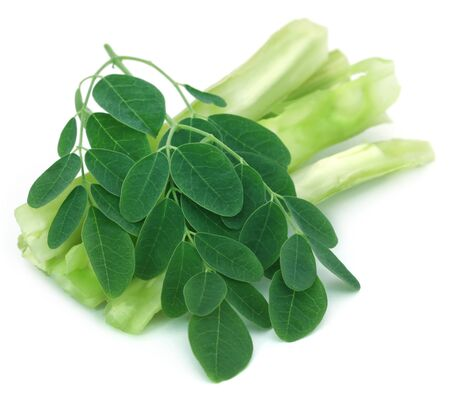 oleifera: Medicinal moringa with green leaves over white background