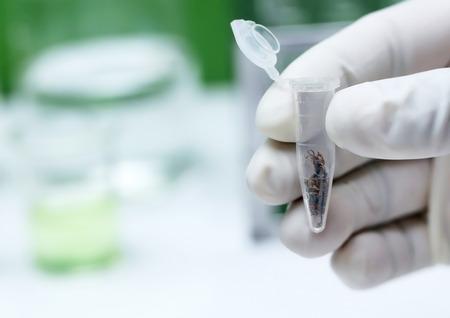 Analysis of marijuana in laboratory