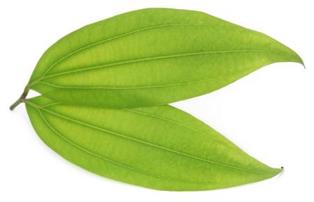 Green bay leaf over white background