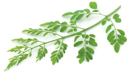 Edible moringa leaves over white background Stock Photo