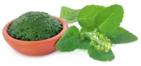 Medicinal holy basil or tulsi leaves with ground paste in a pottery