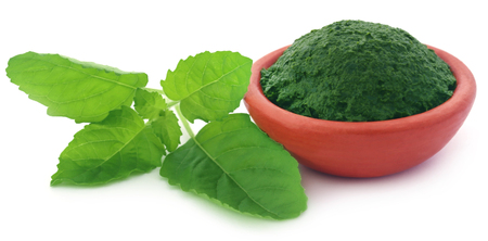 tulasi: Medicinal holy basil or tulsi leaves with ground paste in a pottery