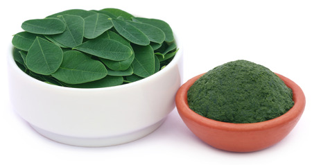 malunggay: Edible moringa leaves with ground paste over white background Stock Photo