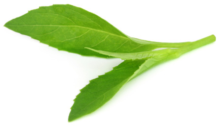 longevity: Gynura procumbens known as longevity spinach used as herbal medicine for many diseases Stock Photo