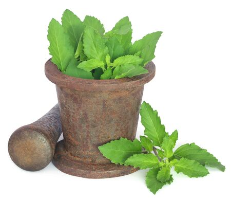 Holy basil or tulsi leaves in a vintage mortar over white background