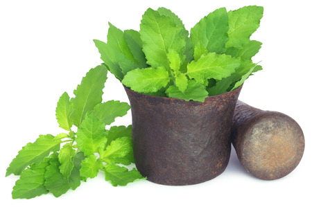 tulsi: Holy basil or tulsi leaves in a vintage mortar over white background