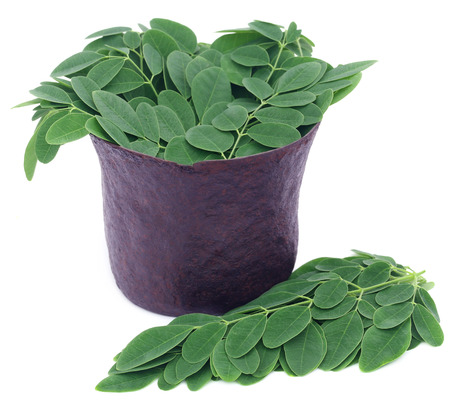 marango: Edible moringa leaves in a vintage mortar over white background