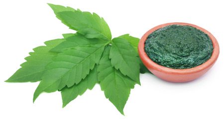 crushing: Paste of medicinal Vitex Negundo with green leaves Stock Photo