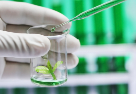 Plant sprout in a beaker as tissue culture concept