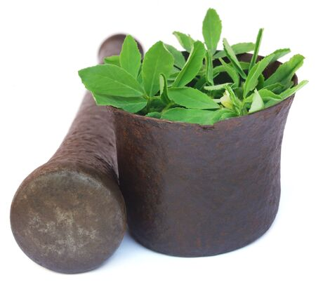 Fenugreek leaves in a mortar with pestle over white background