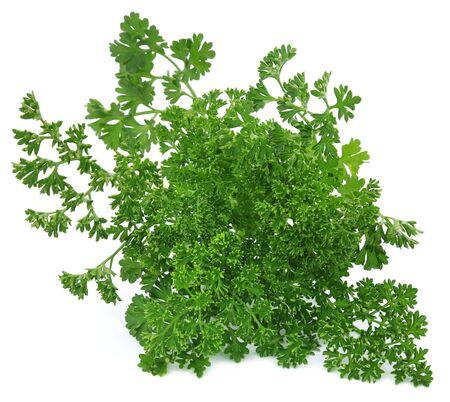 Petroselinum crispum or parsley over white background Stock Photo