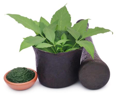 Mashed vitex Negundo or Medicinal Nishinda leaves with mortar and pestle Stock Photo