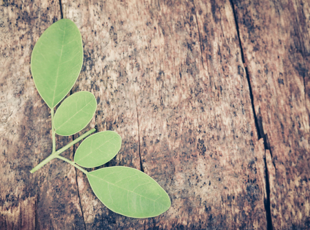 marango: Edible moringa leaves in timber surface