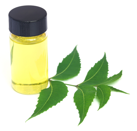 Medicinal neem leaves with essential oil over white background Stock Photo