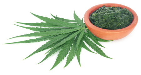 Green and mashed leaves of medicinal cannabis over white background