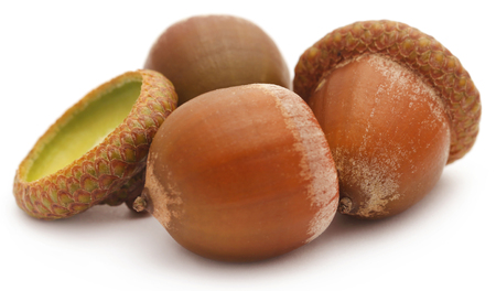 Closeup of acorn over white background